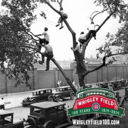 Wrigley Field tree climbers 1932